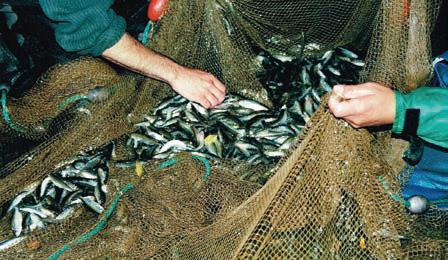 Pêche de friture de Loire ©CONAPPED