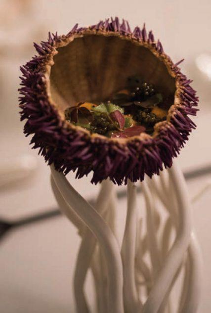 Oursin de Galice - Citron Caviar par Sylvestre Wahid © Géraldine Martens